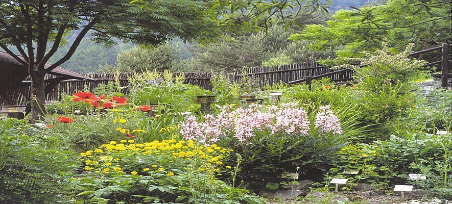 Piante e fiori maggio 2013 for Siepi perenni fiorite