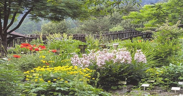 Piante e fiori le piante biennali da esterno for Viola cornuta inverno