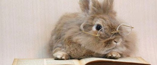 Librarian Bunny Approved