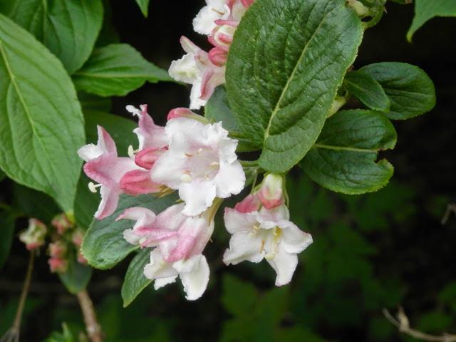 blossom secondhandsusie.blogspot.co.uk