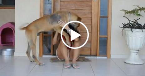 Cachorro adotado ataca dona um mês após ser adotado