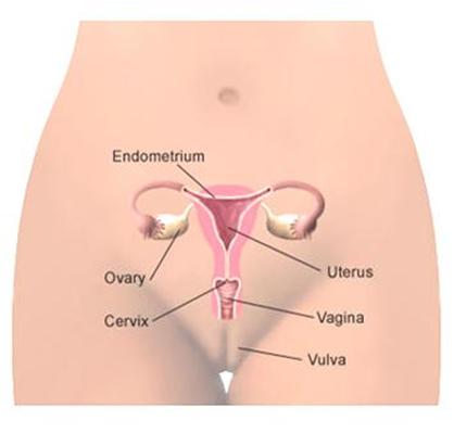 Bab 2 Sistem Reproduksi Pada M Ia Blog Belajar Biologi