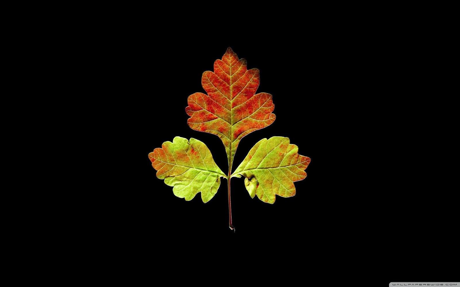 autumn beauty wallpaper
