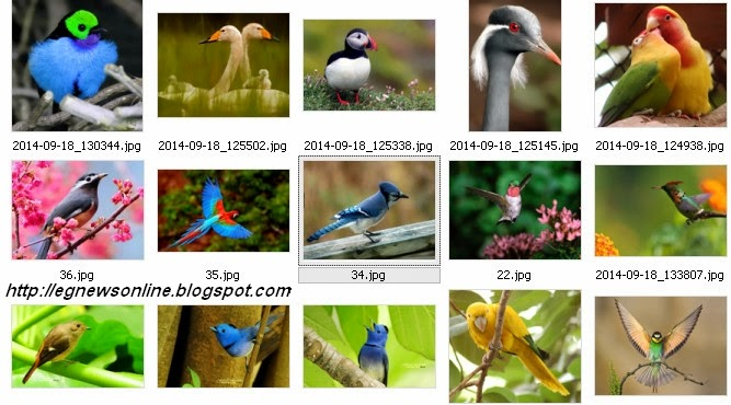 صور طيور , خلفيات طيور ,http://egnewsonline.blogspot.com,جودة عالية , طيور,