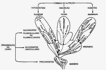 Reino Fungi: Introdução e Características Gerais