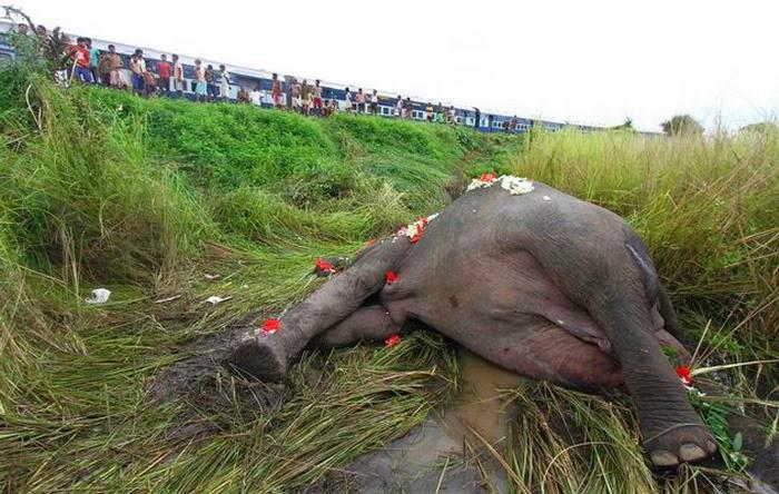 مقتل خمسة الفيلة الهند دهساً