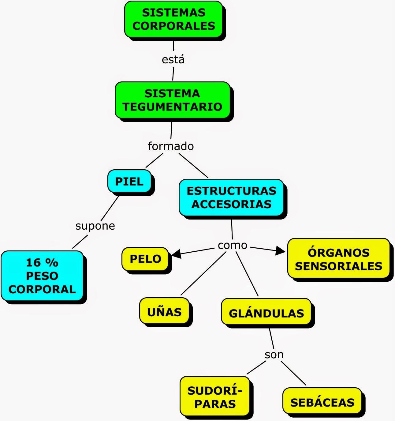 MAPA CONCEPTUAL SOBRE APARATOS Y SISTEMAS CORPORALES | MAPAS ...