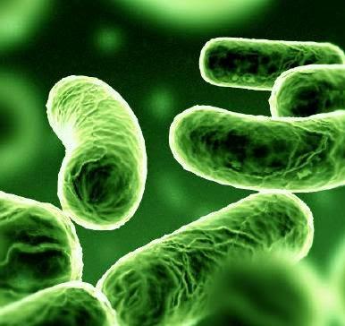 el ebola en españa