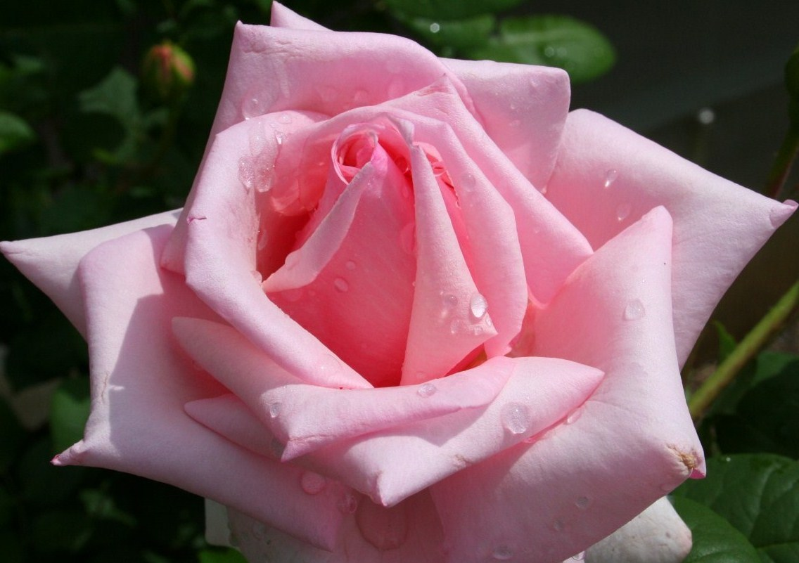 Tentang indahnya bunga di taman kehidupan Rasulullah