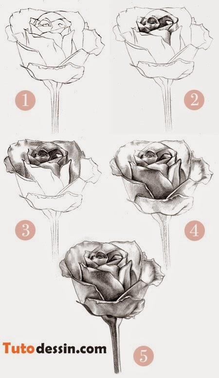 Tuto Dessin Comment Dessiner Une Rose étapes Par étapes