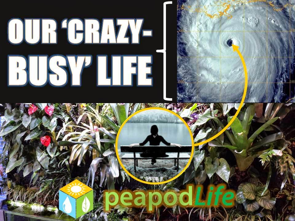 Our 'Crazy-Busy' Life is a Hurricane & PeapodLife is the Eye of the Storm