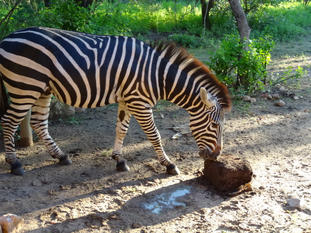 Lick it like a zebra