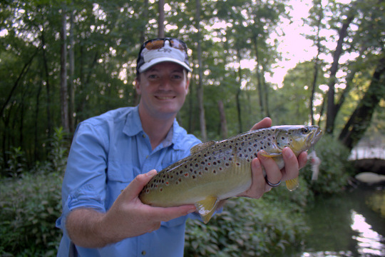 Caney Fork brown trout