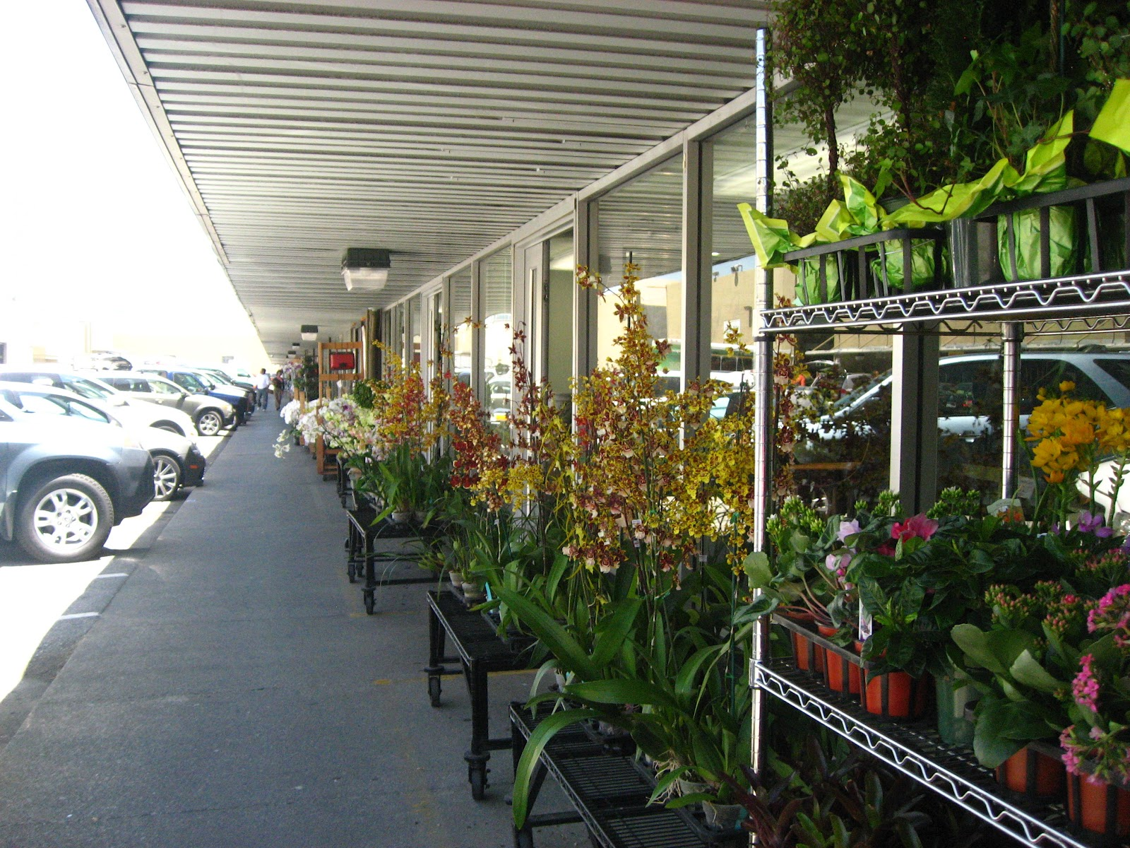Orchidholics Anonymous San Francisco Flower Mart
