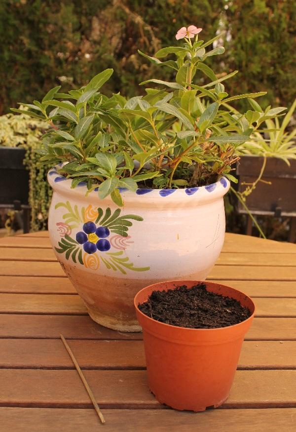 Repicado de plantas guia de jardin for Guia de plantas de jardin