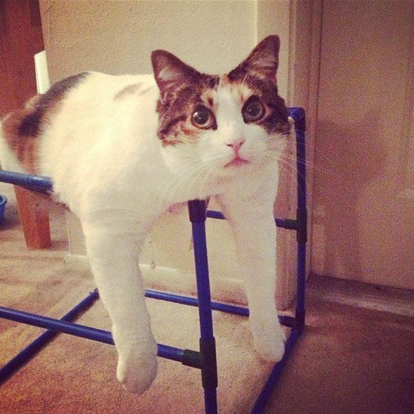 Смешной кот косит под идиота