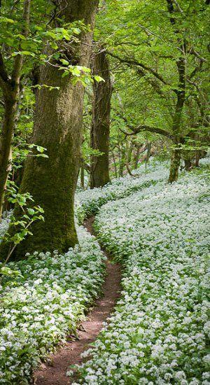 Os caminhos da vida, Nem sempre com flores, As vezes com pedras, Em outras com água, é o caminho