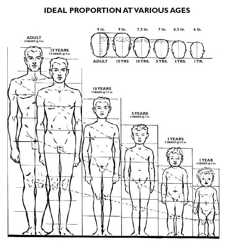 Story of My Life: Andrew Loomis\' Proportions