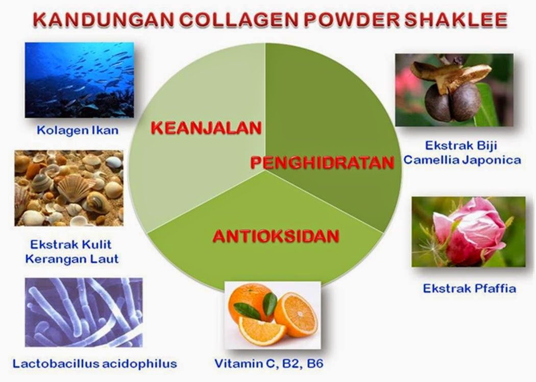 Collagen Powder Shaklee, Kandungan kolagen