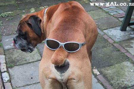 Funny dogs ver funny dogs pictures images