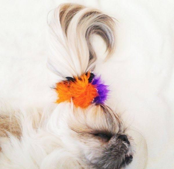 Hình ảnh những chú chó thắt nơ ngộ nghĩnh dễ thương