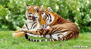 Pengguna ialah haiwan yang memakan tumbuhan dan haiwan lain. Terbahagi kepada 3 jenis iaitu Pengguna Primer, Pengguna Sekunder dan Pengguna Tertier.