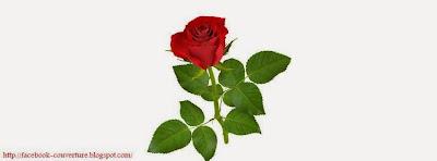 Couverture facebook rose romantique