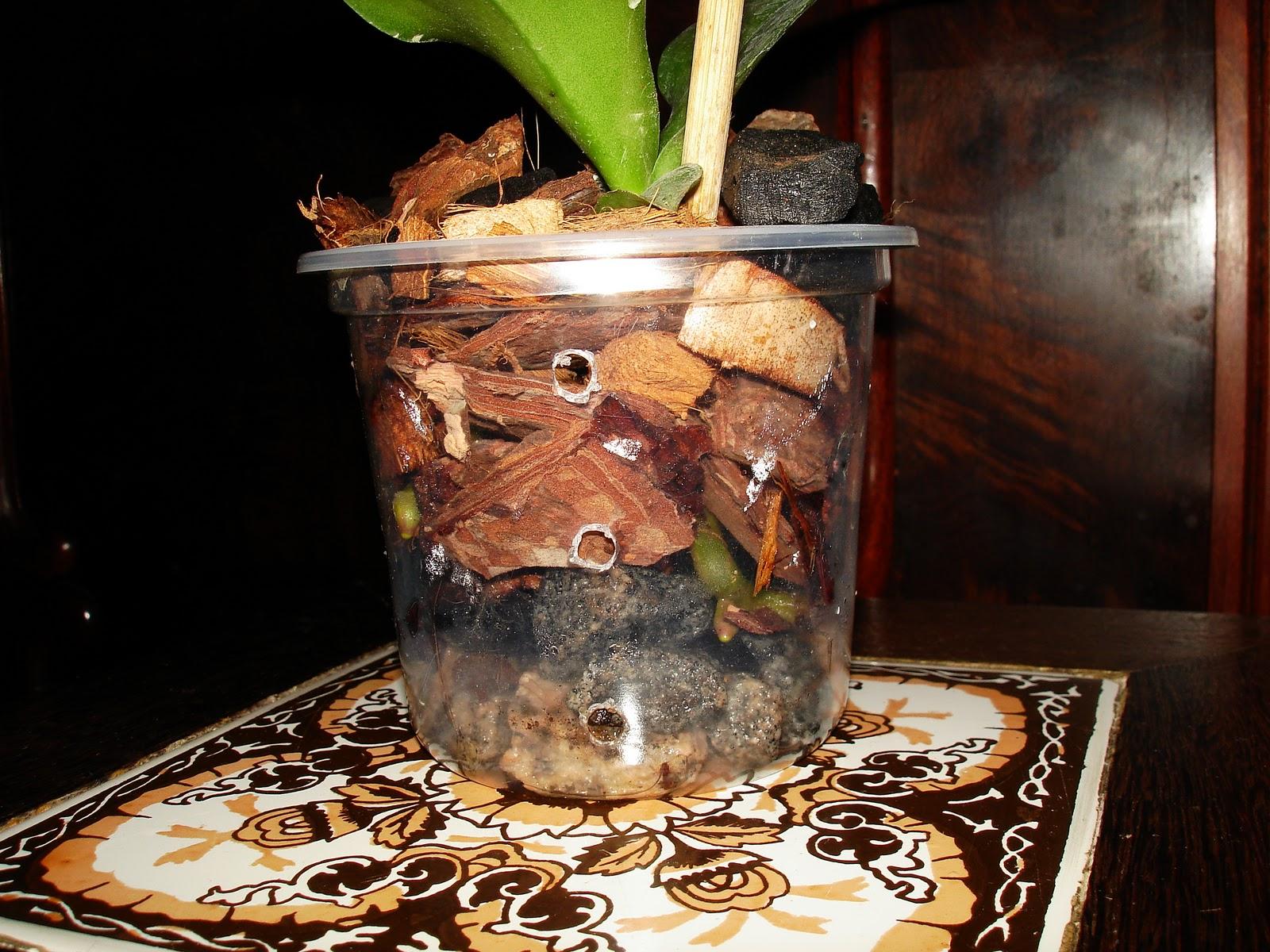 transplantio de orquídeas a essência do cultivo de orquídeas #4D6412 1600x1200