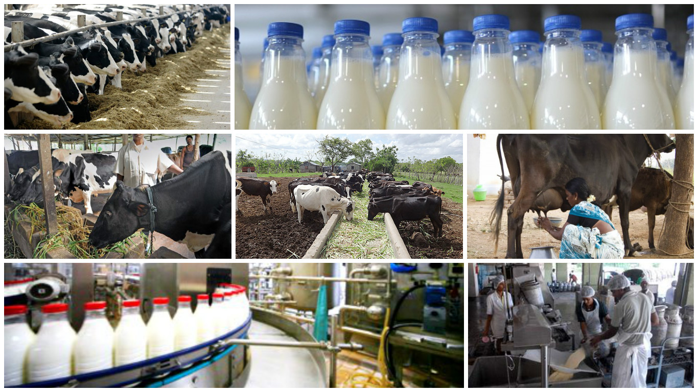 milk and dairy industry Dairycom has built a powerful suite of web-based, dairy industry software applications to manage milk as it moves from the farm to the plant silo.