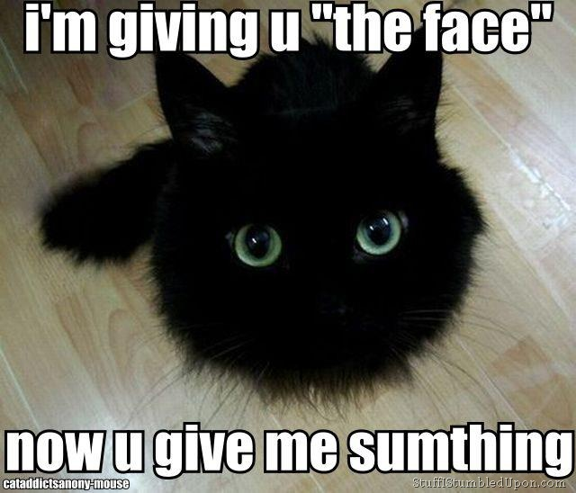 Cat face cute cat meme