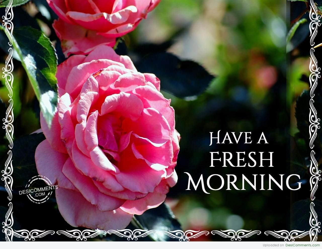 Loving Flowers Wishes Good Morning Wallpaper With Message