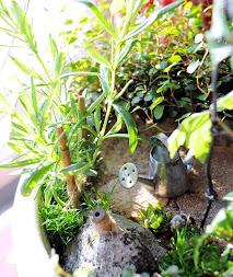 Minipuutarhani - My miniature garden