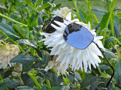 Flower with sunglasses
