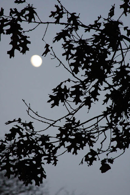 moon and oak leaf silhouette