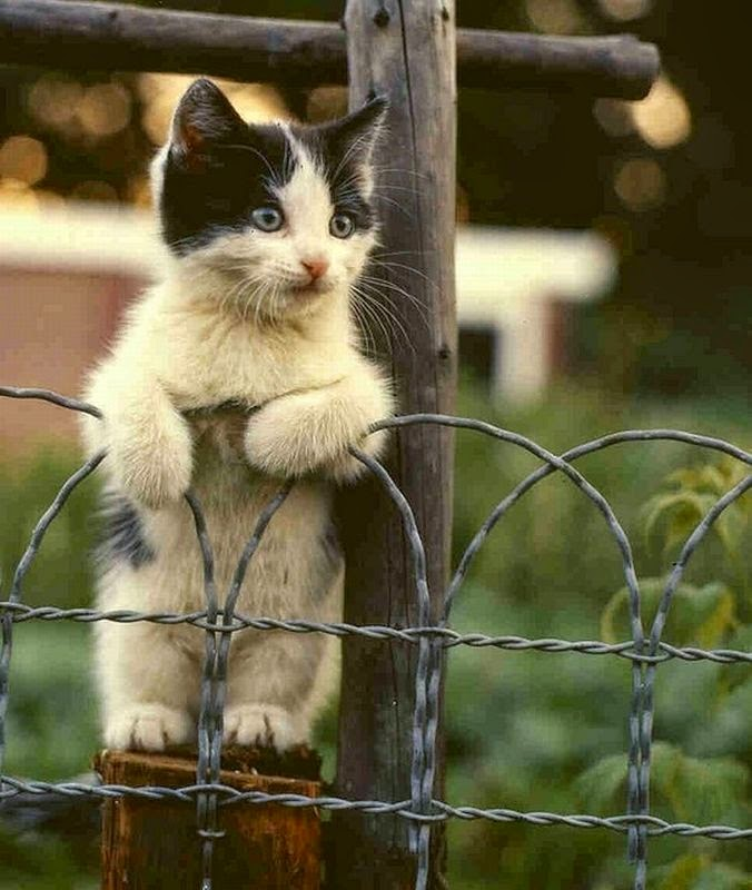 Funny cats - part 120 (40 pics + 10 gifs), funny cat picture, cat photos