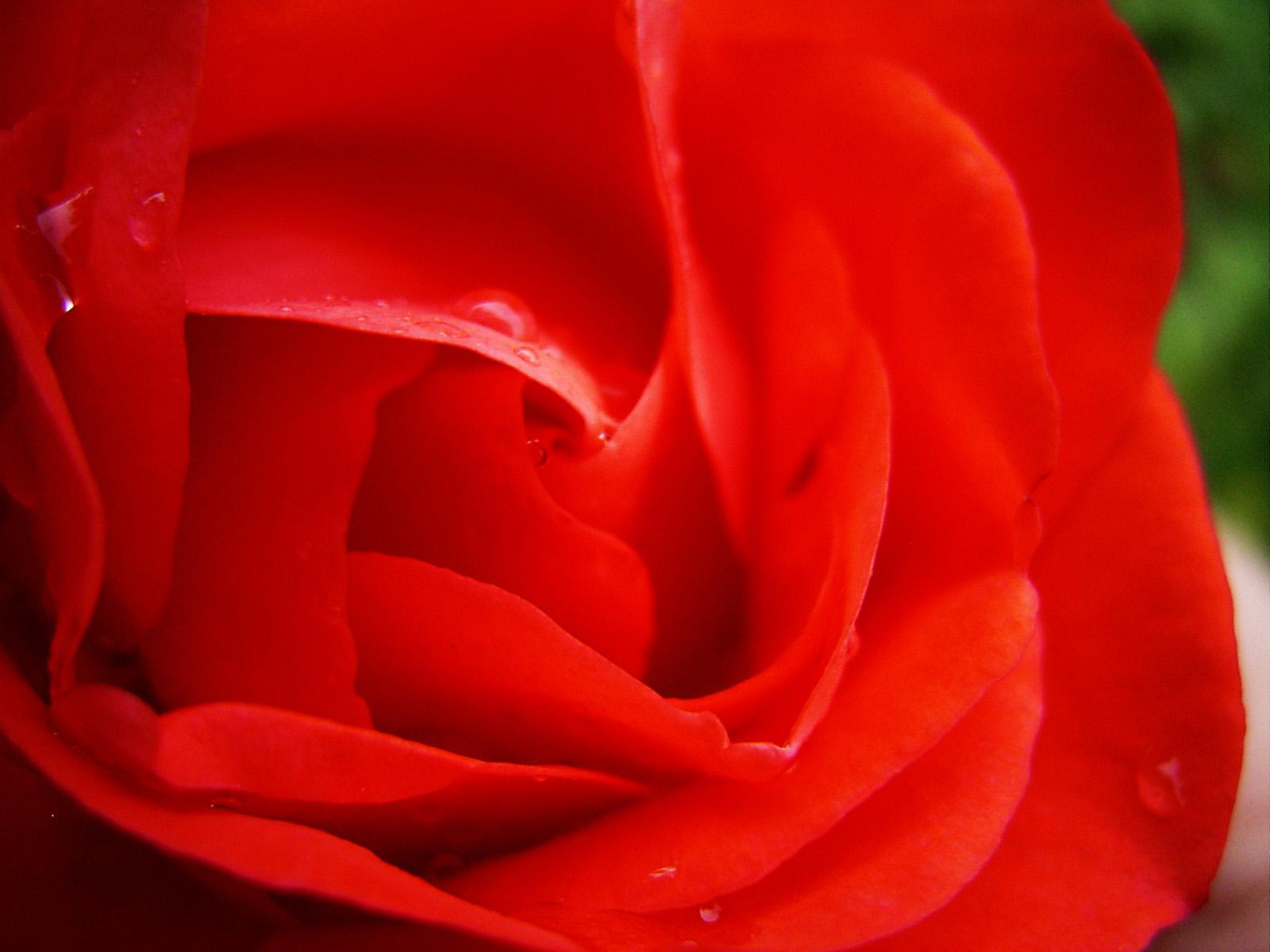 http://1.bp.blogspot.com/-mtNDbTUdxlE/To8ti_P7PDI/AAAAAAAAAgg/Atf6qy_mSi4/s1600/flower008wallpaper.jpg