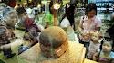 Cidade chinesa encontra 43 ovos de dinossauro em canteiro de obras
