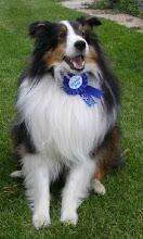 JETHRO- Scenthurdle Dog Master