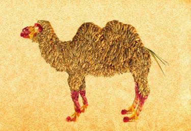 "CAMEL  そら植物園  "" Yucca rostrata"""