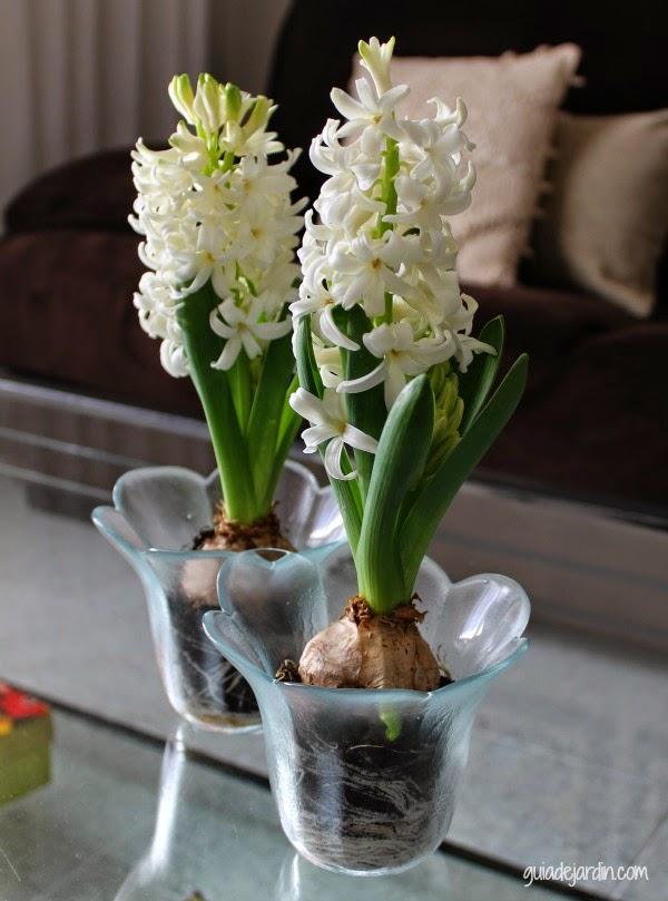 Flores en invierno guia de jardin - Plantas de invierno ...