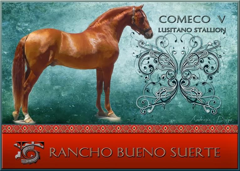 Rancho Bueno Suerte