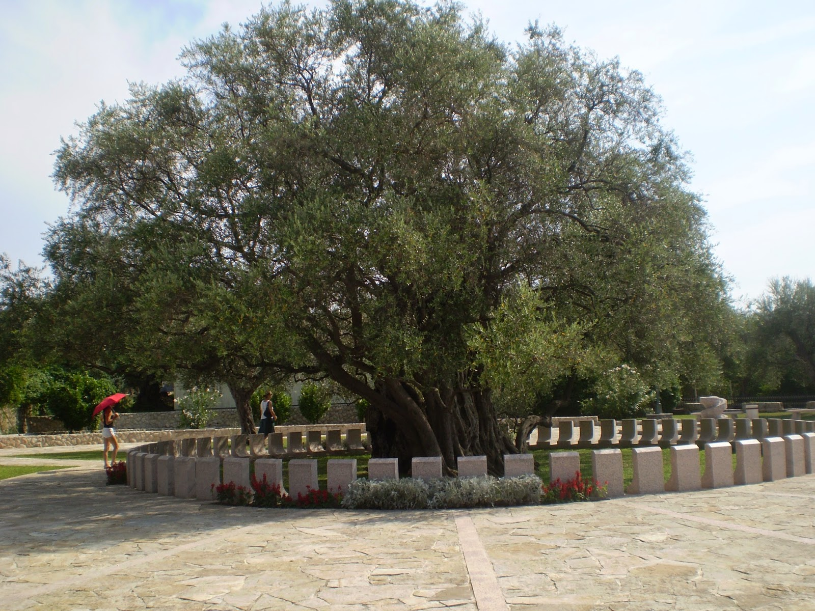Самое-Старое-Дерево-в-Европе