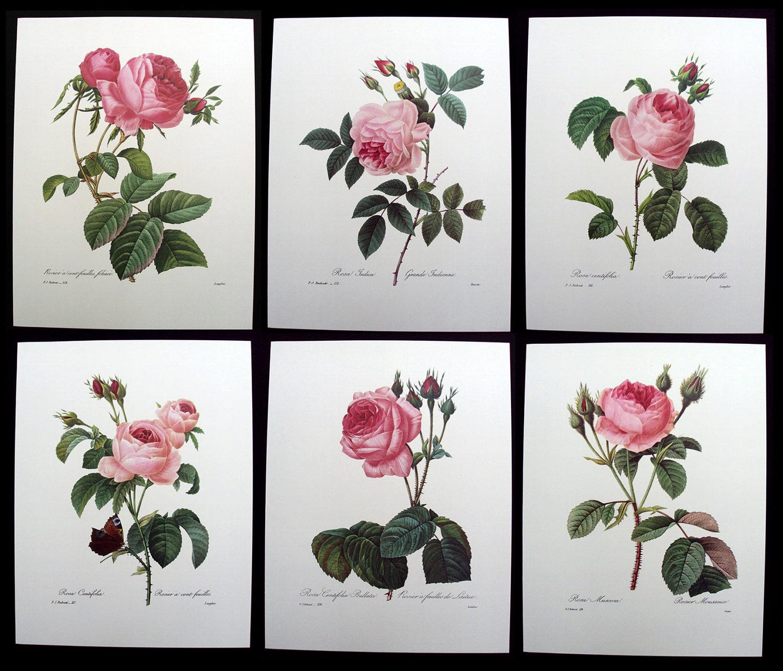 Розовые розы вышивка схемы