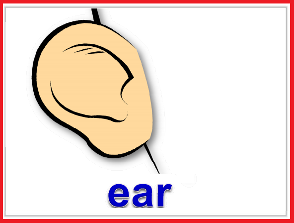 Kindergarten Worksheets: Parts of body Flashcards - Ear