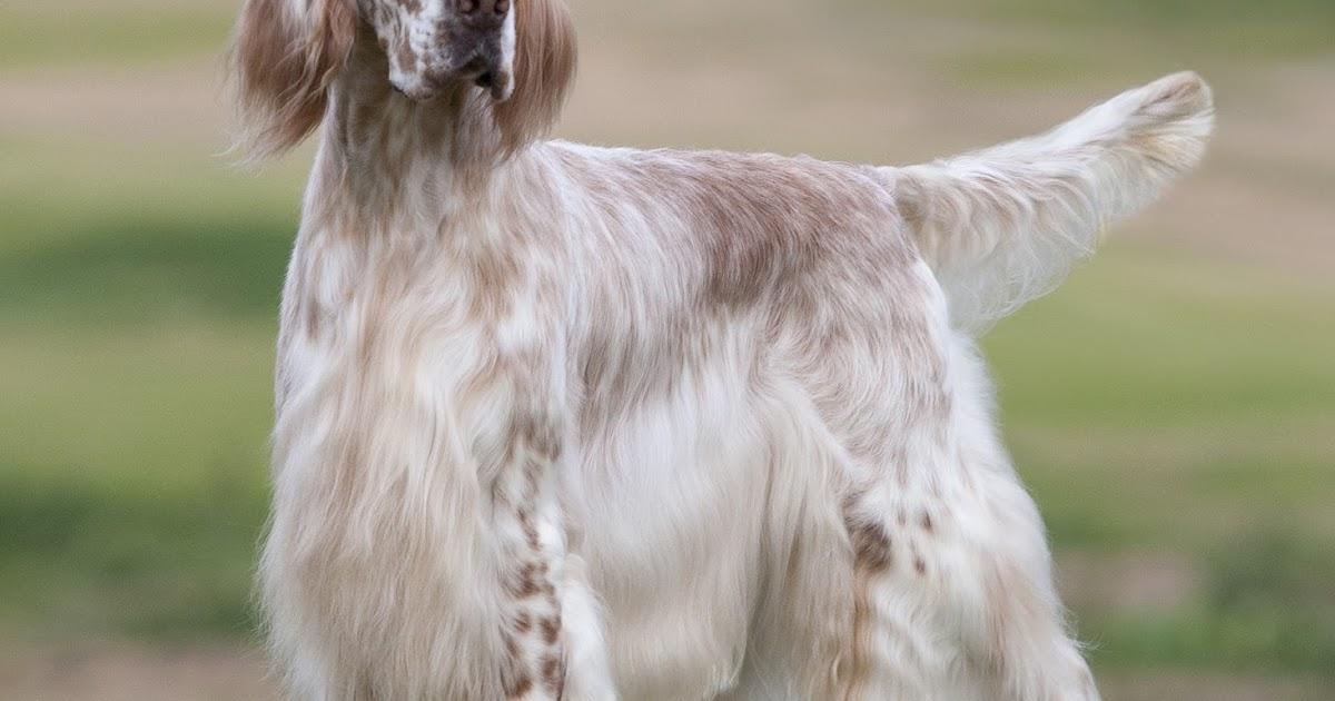 Silver State Kennel Club Dog Show