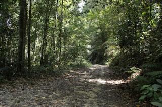 denai hutan