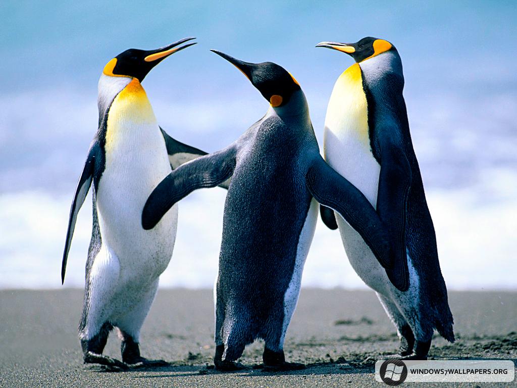 http://1.bp.blogspot.com/-mukk0909ZkU/TVanSyqCgpI/AAAAAAAABWM/6gDvBwWnuPE/s1600/Penguins.jpg