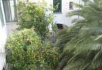 cortile visto dall'aia