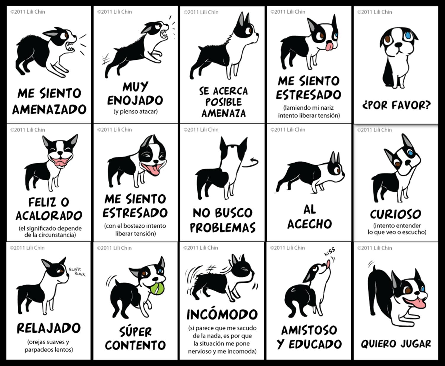 Comportamiento del perrito en un perro adulto