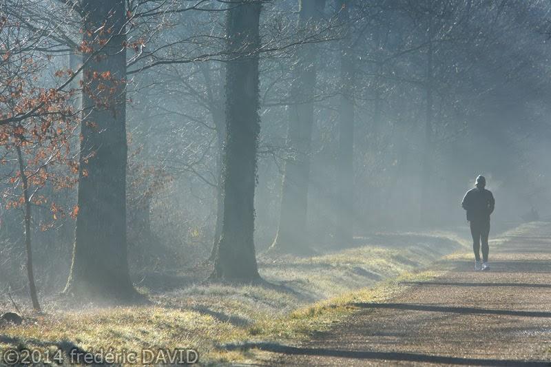 coureur footing sport matin lumière forêt Rougeau Sénart